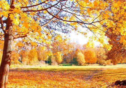 چک لیست پاییزه: شش کار که با فرا رسیدن پاییز باید انجام دهید